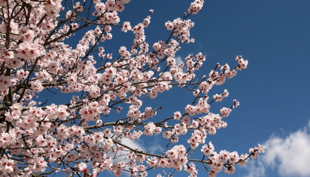 aprilie_1